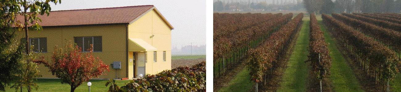 Azienda Agricola Rustichelli produzione vino lambrusco